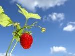 Soil free farm